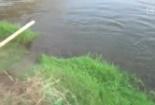 Chụp hình cá sấu, nhiếp ảnh gia suýt bị 'lôi' xuống sông