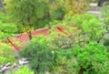 Clip: Hà Nội 'ngày ấy' lung linh trong bóng cây xanh