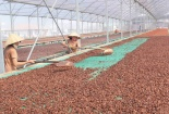 Nâng cao chất lượng chocolate xuất khẩu bằng chương trình UTZ