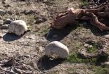 Kinh hãi mồ chôn tập thể hơn 110 người bị IS sát hại ở Iraq