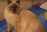 Cư dân một thành phố ở Nga đề cử mèo làm thị trưởng