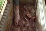 Phát hiện gần 200kg thịt trâu, bò hôi thối