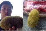 Lại phát hiện 'cát lợn' nặng 2,8kg gây xôn xao dư luận