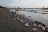 Du khách bịt mũi tắm vì vật thể lạ hôi thối trên bãi biển Trà Cổ