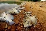 Đi tìm nguyên nhân cá chết xếp lớp, trương phình trên hồ Phước Hà