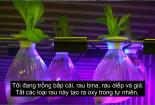 Tận dụng container rỗng trên tàu để trồng rau