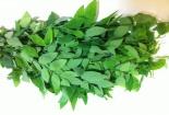 Cách phân biệt rau ngót sạch và rau ngót phun thuốc kích thích