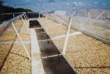 Vĩnh Long: Ứng dụng thiết bị sấy nông sản bằng năng lượng mặt trời