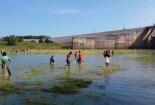 Hàng trăm người đua nhau bắt cá to ở đạp hồ Trị An