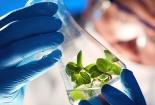 Công nghệ sinh học đang ngày càng giúp cho doanh nghiệp nâng cao năng suất chất lượng