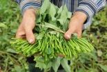 Phát hiện hàng loạt cơ sở sản xuất rau ngâm hóa chất tại TP.HCM, Vũng Tàu, Đồng Nai