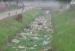 Kinh hoàng rác thải và xác lợn chết đầy kênh mương ở Bắc Giang