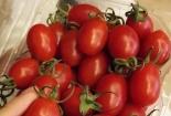 Cà chua bi nửa triệu, nhà giàu sốt bìa đậu phụ 10 ngàn