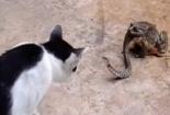 Kinh hãi clip chủ lôi rắn ra khỏi mũi mèo cưng