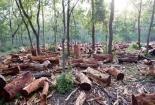 Tội phá rừng trái phép bị xử lý như thế nào?