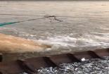 Cả trăm kg cá linh tự nhảy vào xuồng nhờ ống xả nước