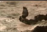 Clip: Đàn kiến lửa hung hãn giết chết trăn khủng trong chớp mắt