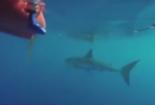 Bị cá mập trắng vây hãm, vẫn dũng cảm làm điều này