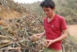 Kết quả ban đầu kiểm tra NM luyện kim màu Lào Cai nghi gây thối dứa
