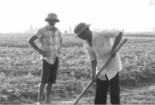 Người nông dân học hết lớp 7 chế robot khiến nhiều người thán phục