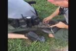 Cá sấu bị cảnh sát bắt giữ khi đang rình rập nhà dân