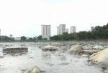 Hà Nội: Rác thải, xác động vật bốc mùi trên mặt hồ đền Lừ