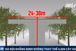 Thông tin bất ngờ về việc thay thế 4.000 cây xà cừ của Hà Nội