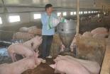 Nguyên nhân nào khiến giá thịt lợn liên tục tăng 'nóng' trong những ngày qua