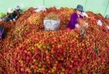 New Zealand mở cửa thị trường và hỗ trợ công nghệ sản xuất, chế biến nông sản Việt