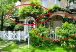 Trồng cây trước nhà không đúng cách, vận xấu bủa vây khiến tài lộc, sức khỏe cả nhà hao tổn