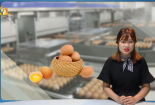 Trứng gà nhiễm độc thuốc trừ sâu: Hàn Quốc cấm sản xuất trứng để kiểm tra