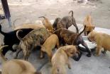 Trang trại chó tiền tỷ của cô gái trẻ Phú Quốc