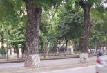 Đường Kim Mã trước ngày sạch bóng cây cổ thụ