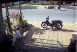 Video: Kinh hoàng chó chạy rông gây tai nạn thảm khốc