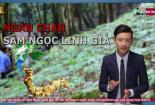 Bản tin Cảnh báo chất lượng: Bộ KH&CN đẩy mạnh ngăn chặn sâm Ngọc Linh giả