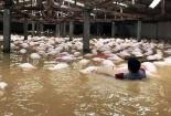 Những thiệt hại nặng nề do mưa lũ tại các tỉnh phía Bắc