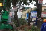 Video: Chặt hạ, di dời gần 1.300 cây xanh để giải tỏa mặt bằng