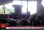 Hãi hùng quy trình sản xuất chè khô pha tạp chất