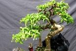 Những điều gia chủ nhất định phải biết khi muốn trồng cây phong thủy trong nhà