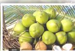 Lợi ích của trái dừa trong đông y