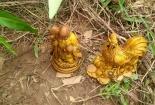Thực hư tin công nhân nhặt được hai pho tượng vàng gây xôn xao ở An Giang