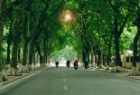 Có thể bị phạt tới 30 triệu đồng nếu đối xử không tốt với cây xanh