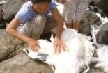 Cẩn trọng với hàng nghìn túi lạ có mùi thơm dạt vào bờ biển