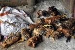 Hàng chục người nhập viện sau khi ăn thịt gà nghi nhiễm thuốc chuột