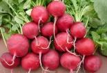 Ai hay ăn củ cải đỏ cần biết 11 tác dụng phụ đáng sợ này để phòng tránh