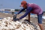 Xuất hiện đông dược làm từ khoai mì ủ hóa chất: Người dân tuyệt đối cẩn trọng