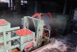 Cận cảnh công nghệ làm cà chua đóng hộp kiểu Italy