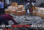 Ngư dân Quảng Ngãi lần đầu trúng mẻ cá hiếm trị giá một tỷ đồng