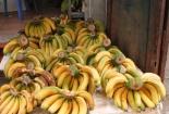 Vì sao ăn trái cây được làm chín bằng đất đèn khiến bạn có thể chết vì ung thư?