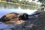 Bí ấn về chiếc xe sang Mercedes-Benz bị chôn vùi dưới lòng sông suốt 3 tháng